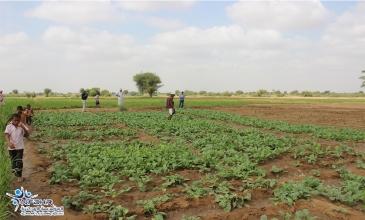 المؤسسة تحول الأراضي القاحلة الى مساحات خضراء منتجة