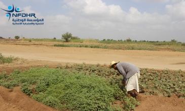 After 15 years of oblivion, Al-Shuqaif Village is back to vegetable farming
