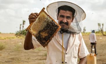 إبراهيم مبكري يعود لتربية النحل من جديد