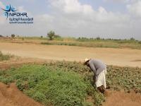 قرية الشقيف تعود لزراعة الخضروات بعد انقطاع استمر ١٥ عاما