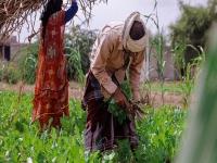 قرية قلعة الجود تحقق الاكتفاء الذاتي في زراعة بعض الخضار
